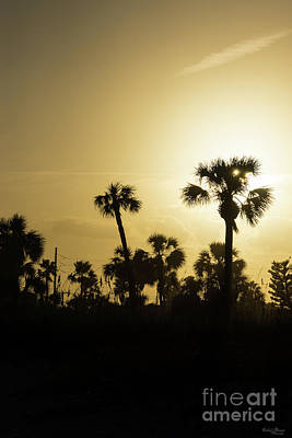 Photograph - Cocoa Palm Silhouette by Jennifer White