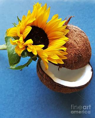Photograph - Coconut And Sunflower Harmony by Jasna Gopic