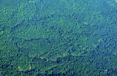 Photograph - Coconut Groves From Above, Thailand by Randy Straka