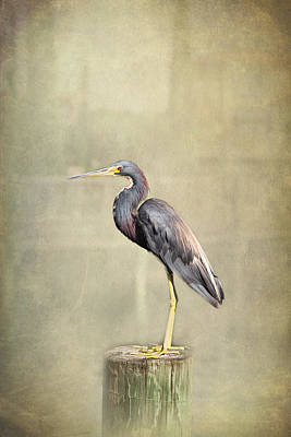 Coconut Heron Light Art Print