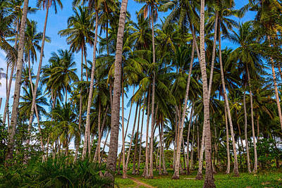 Photograph - Coconut Jungle Paradise by James BO Insogna