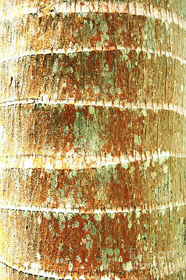 Coconut Palm Bark 2 Art Print