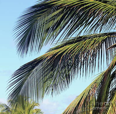 Photograph - Swaying Palm Branches by The Art of Alice Terrill