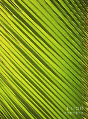 Coconut Palm Art Print by Brandon Tabiolo - Printscapes