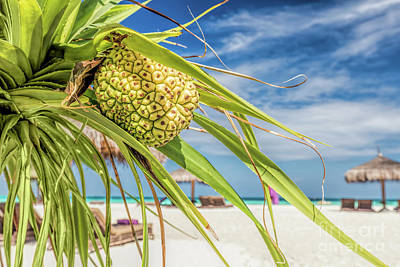 Luxury Photograph - Coconut Palm On The Beach In Maldives, Indian Ocean by Michal Bednarek