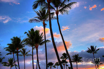 Photograph - Coconut Palm Sunrise by Kelly Wade