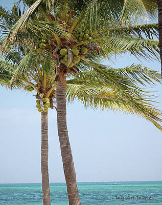 Coconut Palm Tango Art Print