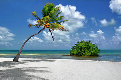 Photograph - Coconut Palm Tree And Island In Florida Keys by Justin Kelefas