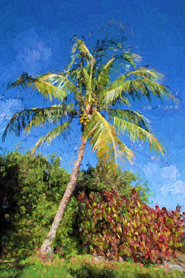 Photograph - Coconut Palm Tree  by HH Photography of Florida