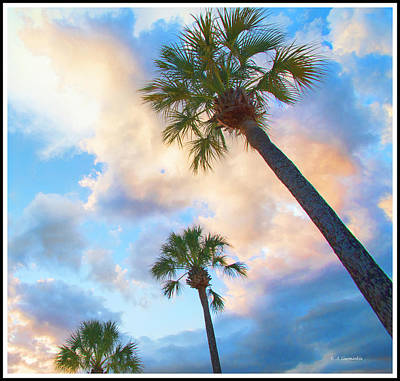 Photograph - Coconut Palm Tree Silhouettes At Sunset by A Gurmankin