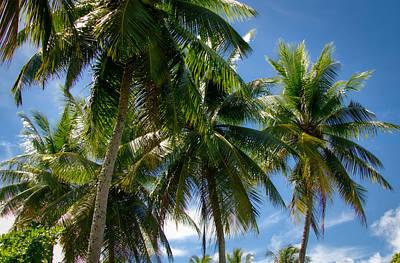 Photograph - Coconut Palms by Byron Fair