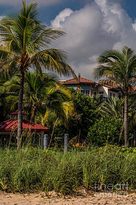 Coconut Palms  Art Print