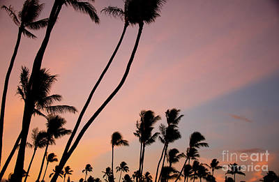Photograph - Coconut Sunrise by Kelly Wade