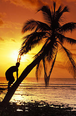 Climbing In Photograph - Coconut Tree Climber by Sean Davey