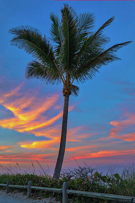 Photograph - Coconut Tree by Juergen Roth