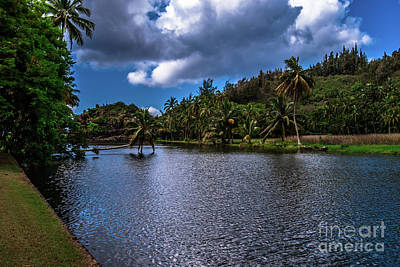 Photograph - Coconut Tree Over River Kauai Hawaii by Blake Webster