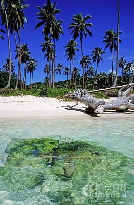 Remoteness Photograph - Coconut Trees Along Siviri Beach On The Island Of Efate by Sami Sarkis