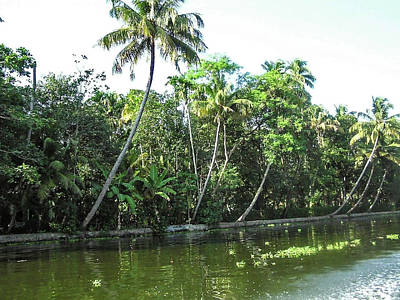 Photograph - Coconut Trees And Other Plants Lined Up Next To A Creek by Ashish Agarwal