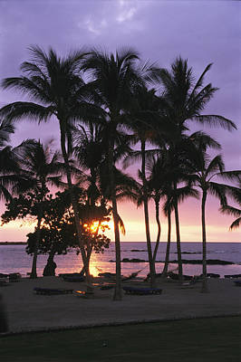Beach Scenes Photograph - Coconut Trees Silhouetted On Mauna Lani by Richard Nowitz