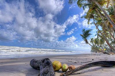 Photograph - Coconut Water by Nadia Sanowar