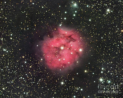 Photograph - Cocoon Nebula Ic5146 by David Watkins