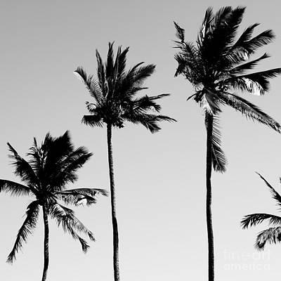 Photograph - Cocotier Noir by Sharon Mau
