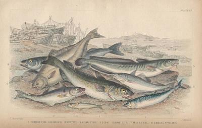 Cod And Halibut Art Print