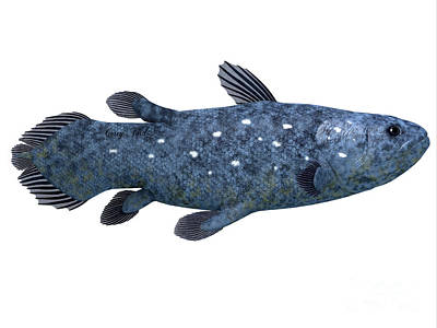 Coelacanth Fish On White Art Print by Corey Ford
