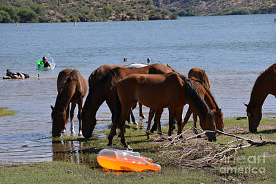 Photograph - Coexistence Salt River Wild Horses Tonto National Forest Number Four Rafting Horizontal by Heather Kirk