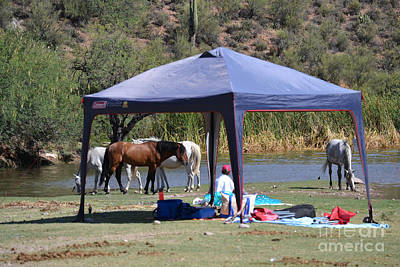Photograph - Coexistence Salt River Wild Horses Tonto National Forest Number Three Tent by Heather Kirk