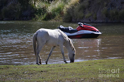 Photograph - Coexistence Salt River Wild Horses Tonto National Forest Number Two Jet Ski by Heather Kirk