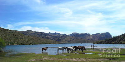 Photograph - Coexistence Salt River Wild Horses Tonto National Forest Panoramic by Heather Kirk