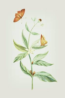 Mixed Media - Coffee Branch With Butterfly Without Caterpillar By Cornelis Markee 1763 by Cornelis Markee