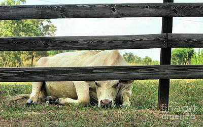 Photograph - Coffee Break Cow by Rick Lipscomb