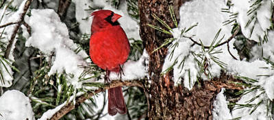 Photograph - Coffee Cup Cardinal Closeup by Lara Ellis