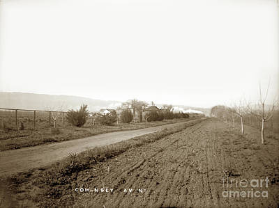 Photograph - Cohansey Avenue, Gilroy, Santa Clara Valley Circa 1900 by California Views Mr Pat Hathaway Archives