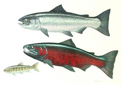 Painting - Coho Salmon by Shari Erickson