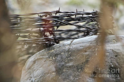 Photograph - Coiled Barbed Wire by Ann E Robson