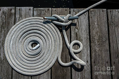 Photograph - Coiled By J. Long by Joann Long