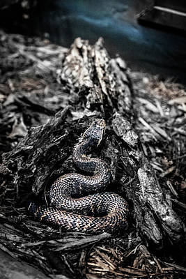 Photograph - Coiled by Eric Christopher Jackson