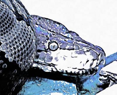 Photograph - Coiled Snake by Ashish Agarwal