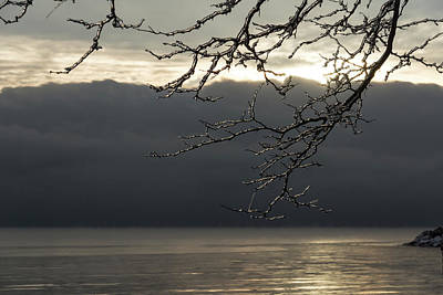 Photograph - Cold Beauty - Ice Covered Branches At The Waterfront by Georgia Mizuleva