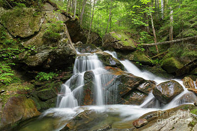 Photograph - Cold Brook - White Mountains New Hampshire by Erin Paul Donovan