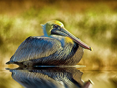 Photograph - Cold Brown Pelican by Bill Barber