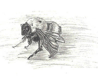Bumblebee Drawing - Cold Bumblebee by Dawn Senior-Trask