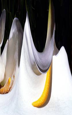 Abstract Movement Digital Art - Cold Calla Poles by Norman  Andrus