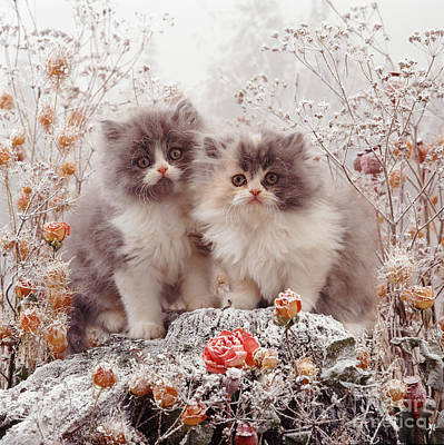 Photograph - Cold Cats by Warren Photographic