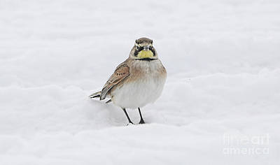 Photograph - Cold Feet And Beak by Elizabeth Winter