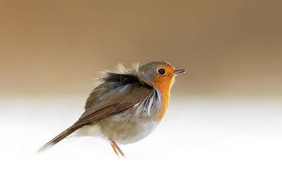 Cold Feet II - Little Red Robin In The Snow Art Print