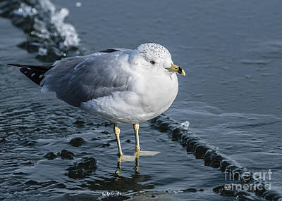 Photograph - Cold Feet by Joann Long